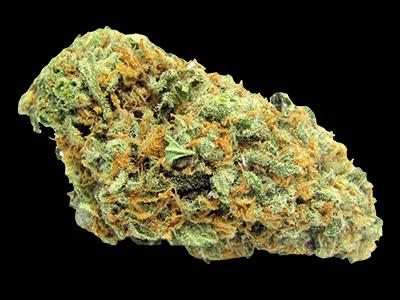 HYBRIDE - Graines de Cannabis