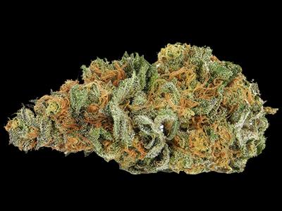 SATIVA - Graines de Cannabis